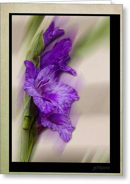 Botanical Greeting Cards - Purple Gladiolus Greeting Card by Patti Deters