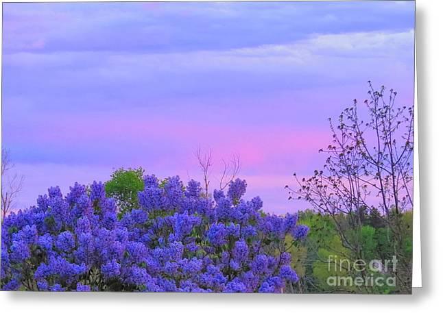 Purple Haze Greeting Card by David Lankton