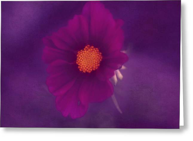 Melanie Lankford Photography Greeting Cards - Purple Haze Greeting Card by Melanie Lankford Photography