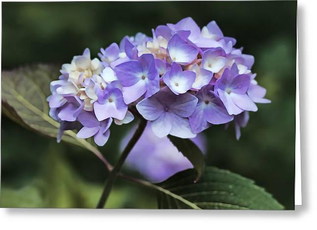 Purple Hydrangeas Greeting Cards - Purple Hydrangea Flower Bouquet Greeting Card by Jennie Marie Schell