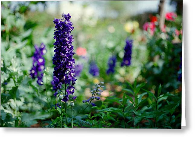 Garden Scene Greeting Cards - Purple in the Garden Greeting Card by Linda Unger