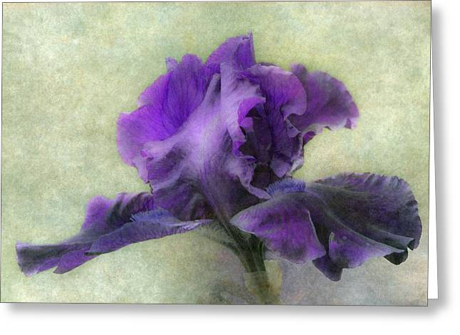 Bearded Iris Greeting Cards - Purple Iris Greeting Card by Angie Vogel