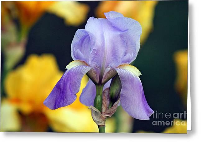 Purple Iris Greeting Card by Karen Adams