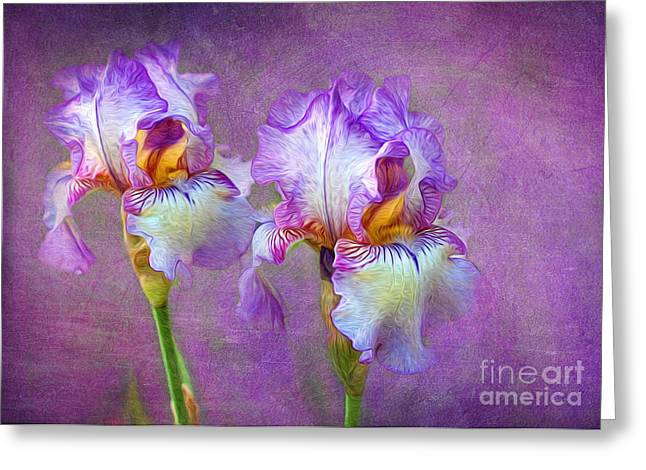 Texture Flower Greeting Cards - Purple Iris Greeting Card by Lena Auxier