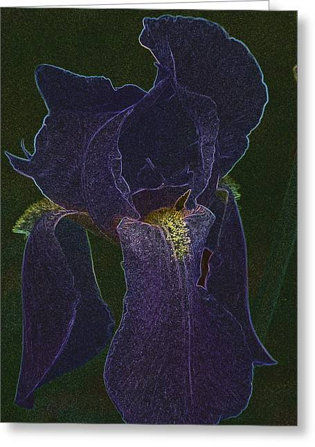 Abstract Style Greeting Cards - Purple iris on black Greeting Card by Darrell Arnold