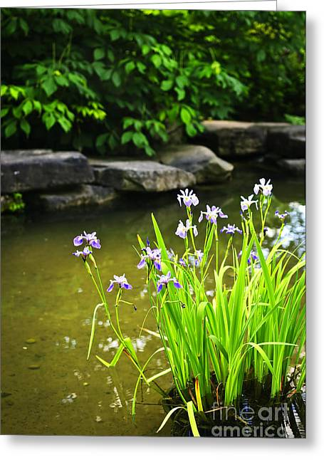 Stones Greeting Cards - Purple irises in pond Greeting Card by Elena Elisseeva