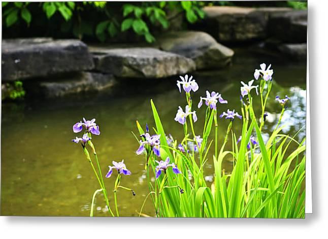 Purple irises in pond Greeting Card by Elena Elisseeva