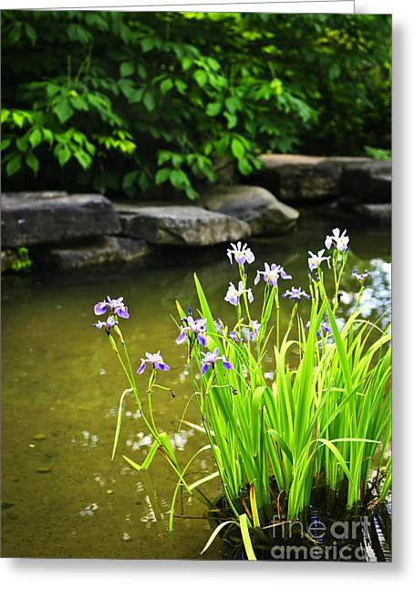 Beautiful Creek Greeting Cards - Purple irises in pond Greeting Card by Elena Elisseeva