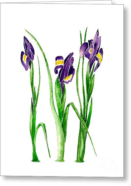 Spring Bulbs Greeting Cards - Purple Irises Greeting Card by Nan Wright