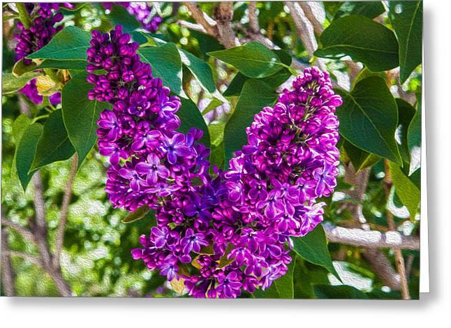 Purple Lilac Love Greeting Card by Omaste Witkowski