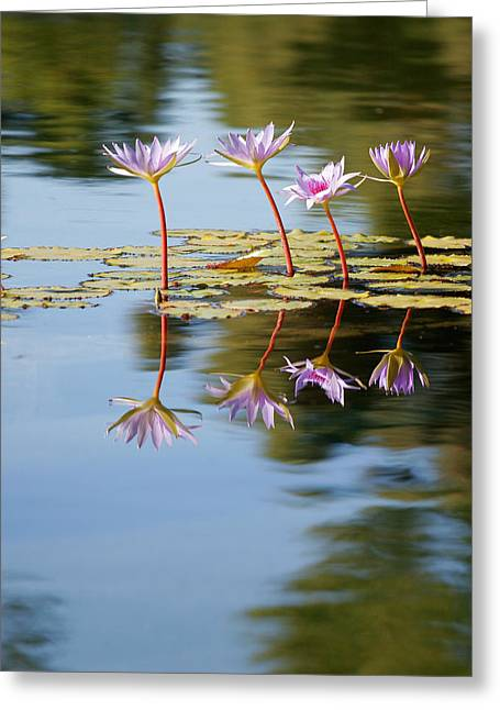 Lilly Pad Greeting Cards - Purple Lillies Greeting Card by Peter Tellone