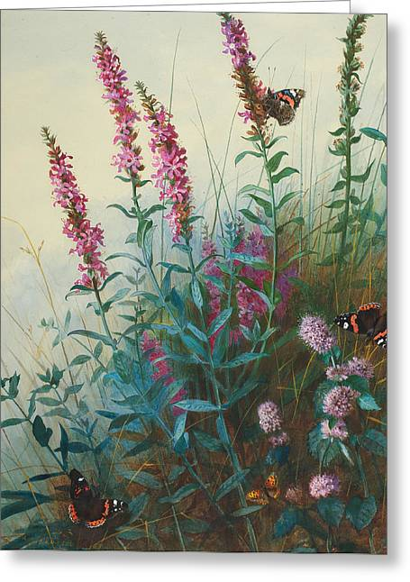 Butterfly On Flower Greeting Cards - Purple Loosestrife and Watermind Greeting Card by Archibald Thorburn