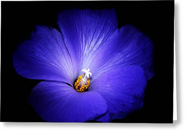 Stamen Digital Art Greeting Cards - Purple Magic Greeting Card by Camille Lopez