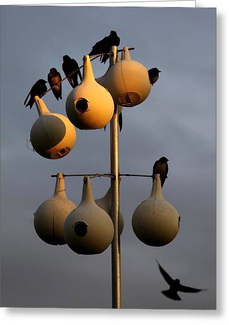 Reflections Of Sky In Water Greeting Cards - Purple Martin Twilight Greeting Card by Karen Wiles