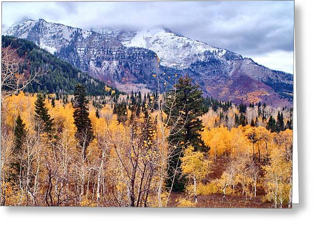 Fallscape Greeting Cards - Purple N Gold Greeting Card by Valene Dubbelman