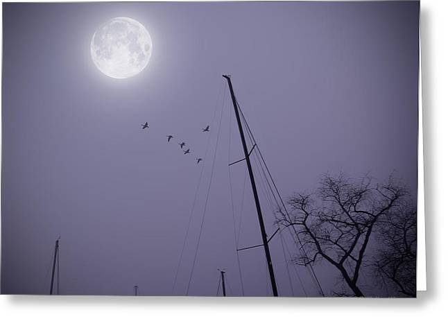 South For The Winter Greeting Cards - Purple Night Greeting Card by Brian Wallace