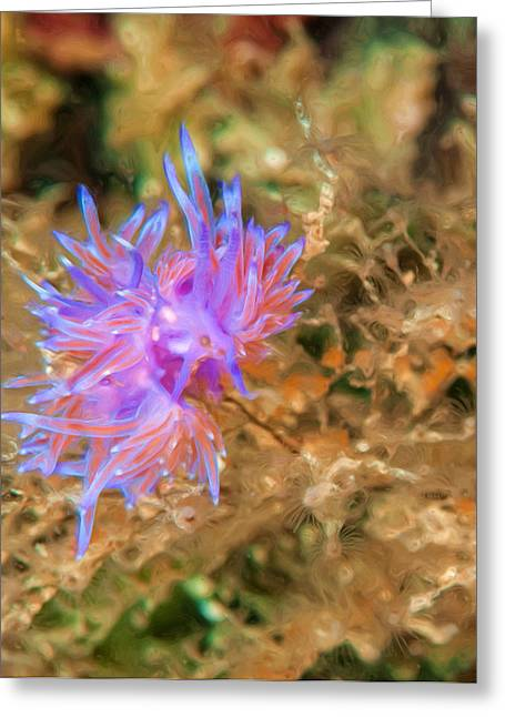 Underwater Photos Mixed Media Greeting Cards - Purple Nudibranch Greeting Card by Roy Pedersen
