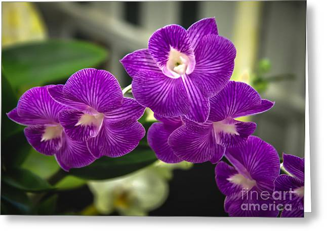 Picturesqueness Greeting Cards - Purple Orchid Greeting Card by Robert Bales