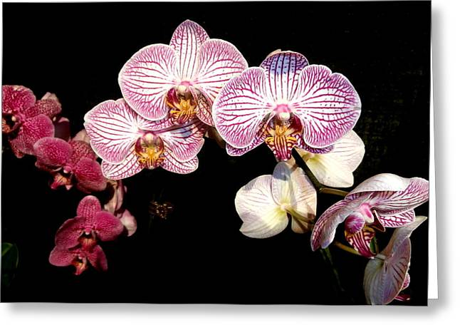 Kate Gallagher Greeting Cards - Purple Orchids Greeting Card by Kate Gallagher