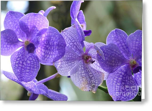 Struckle Greeting Cards - Purple Orchids Greeting Card by Kathleen Struckle
