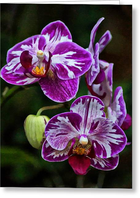 Orchids Art Greeting Cards - Purple Orchids Greeting Card by Sandy Keeton