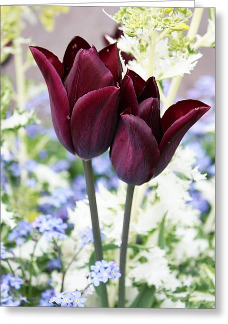 Spring Bulbs Greeting Cards - Purple Pair Greeting Card by Gerry Bates