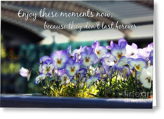 Purple Pansies and Life Quote Greeting Card by Nishanth Gopinathan