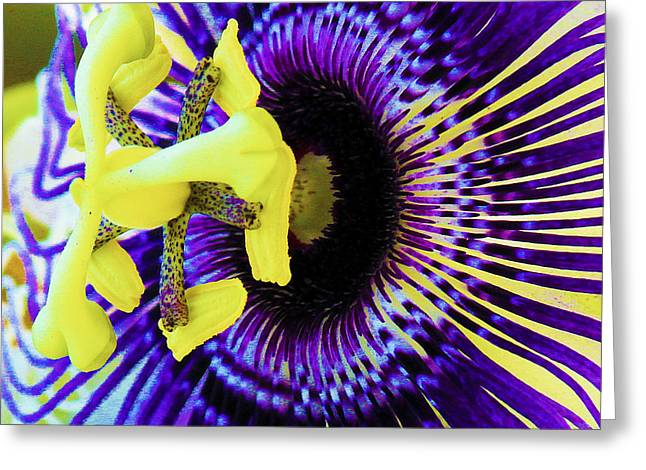 Passionflower Greeting Cards - Purple Passion Flower v1 Greeting Card by Karen Anderson