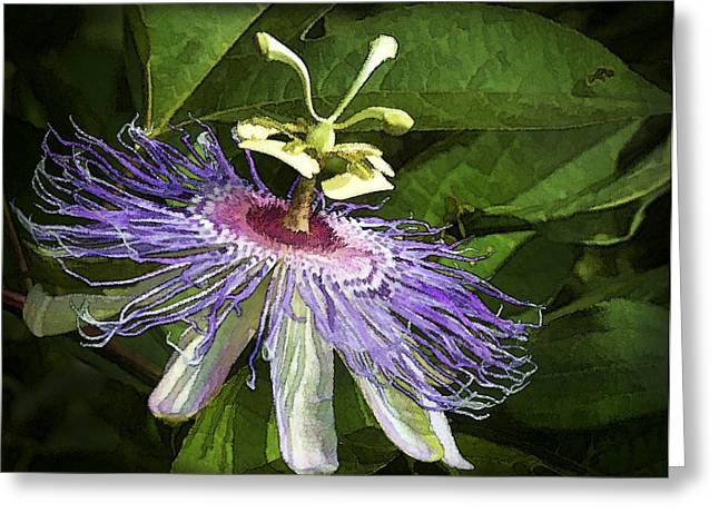 Passiflora Digital Art Greeting Cards - Purple Passion Greeting Card by Kathy Clark
