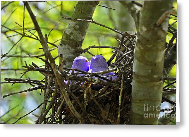 Peeping Greeting Cards - Purple Peeps Pair Greeting Card by Al Powell Photography USA
