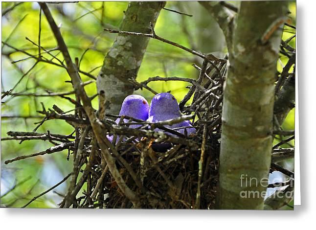 Purple Peeps Pair Greeting Card by Al Powell Photography USA