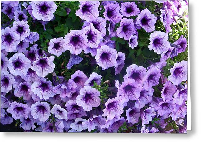 Summertime Greeting Cards - Purple Petunias Greeting Card by Aimee L Maher Photography and Art