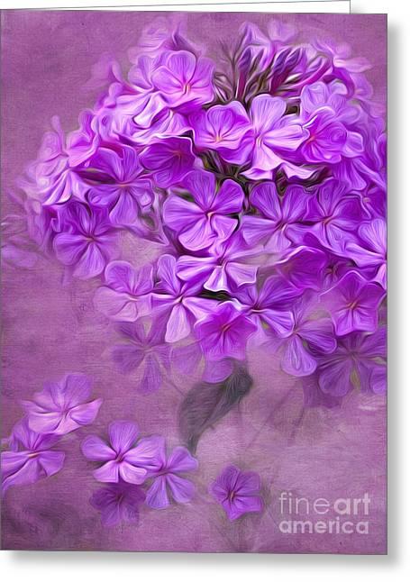Purple Phlox Greeting Cards - Purple Phlox Greeting Card by Lena Auxier