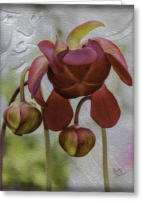 Old Pitcher Greeting Cards - Purple Pitcher Plant Greeting Card by Betty Denise