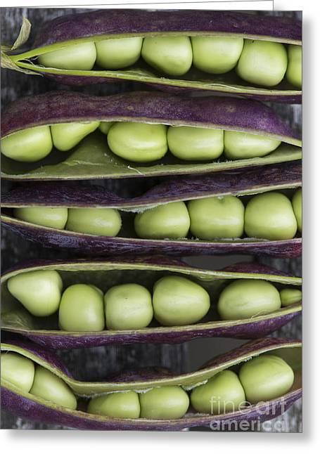 Pods Greeting Cards - Purple Podded Pea Pattern Greeting Card by Tim Gainey