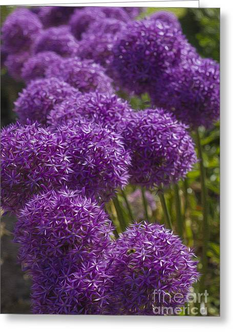 Stamen Digital Art Greeting Cards - Purple Pompoms Greeting Card by Clare Bambers