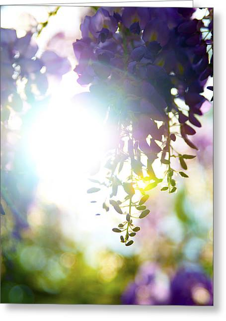 Purlple Greeting Cards - Purple Possibilities Greeting Card by Peak Photography by Clint Easley