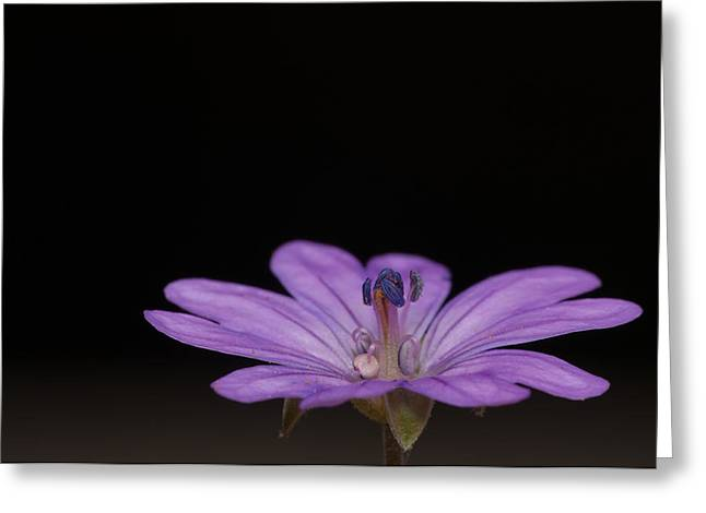 Reverence Greeting Cards - Purple Reverence Greeting Card by Christina Rahm