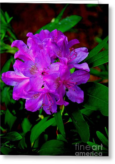 Ru Greeting Cards - Purple Rhododendron  Greeting Card by Lj Lambert