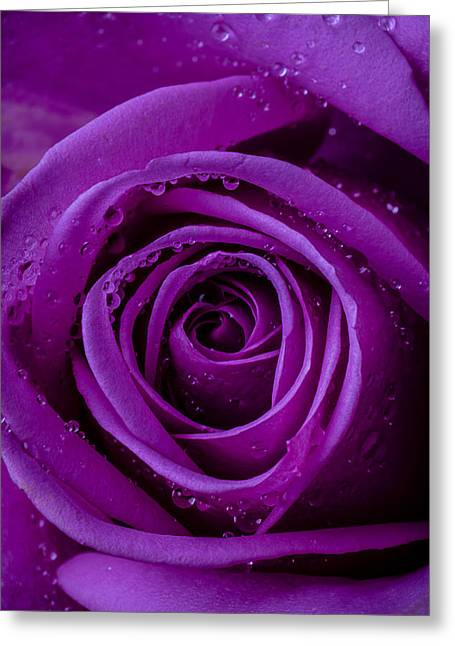 Purples Greeting Cards - Purple Rose Close UP Greeting Card by Garry Gay