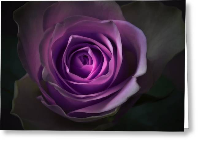 Flora Framed Prints Greeting Cards - Purple Rose Flower - Macro Flower Photograph Greeting Card by Artecco Fine Art Photography