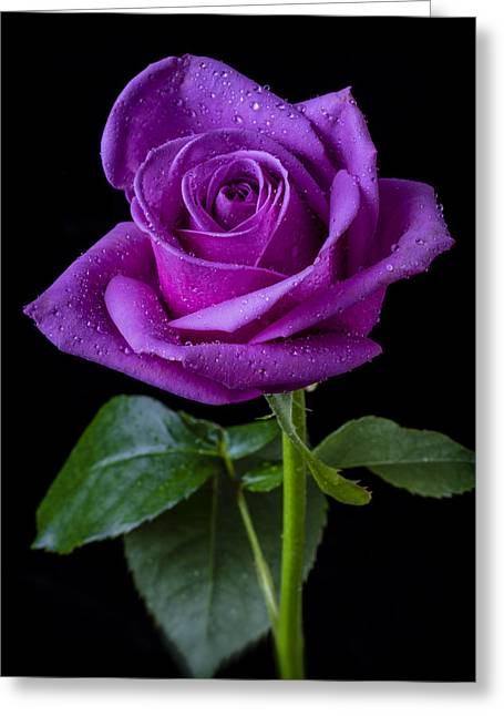 Wet Petals Greeting Cards - Purple Rose Greeting Card by Garry Gay