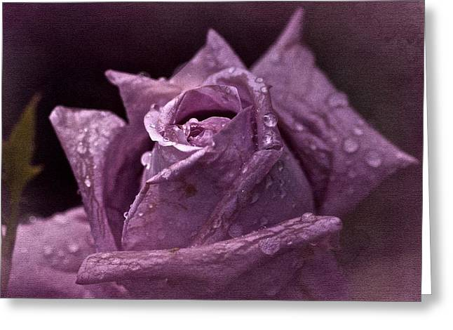 Purple Roses Greeting Cards - Purple Rose Greeting Card by Richard Cummings