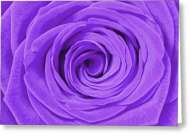 Rose Petal Heart Greeting Cards - Purple Rose Greeting Card by Semmick Photo