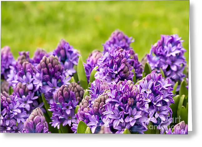 Foliage Fragrance Greeting Cards - Purple Scent In The Air Greeting Card by Leyla Ismet