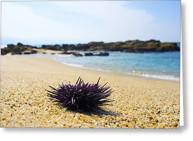 Orange Starfish Greeting Cards - Purple Seastar Greeting Card by Aged Pixel