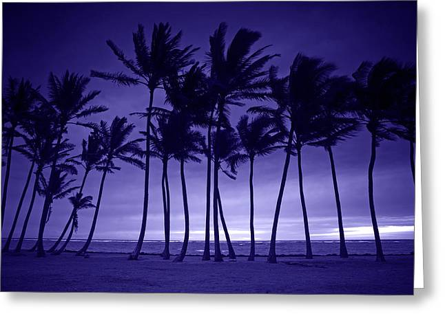 Reflecting Water Pyrography Greeting Cards - Purple Silhouette of Tall Palm Trees  Greeting Card by Katrina Brown