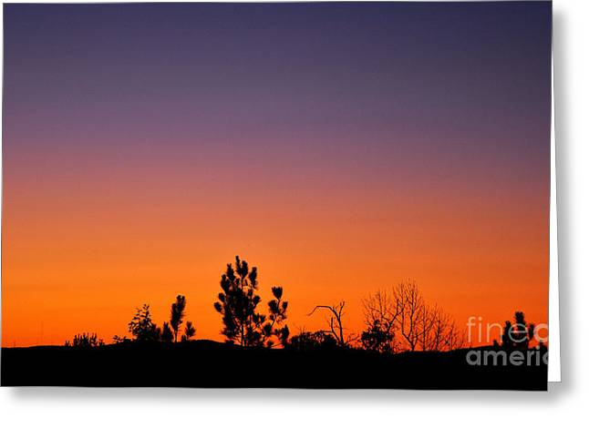 Dogwood Silhouette Greeting Cards - Purple Sky Greeting Card by Stuart Mcdaniel