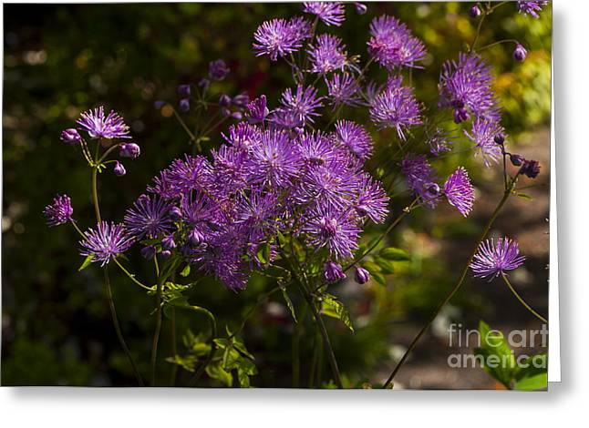 Oregon Greeting Cards - Purple Spiky Flower Greeting Card by Mandy Judson