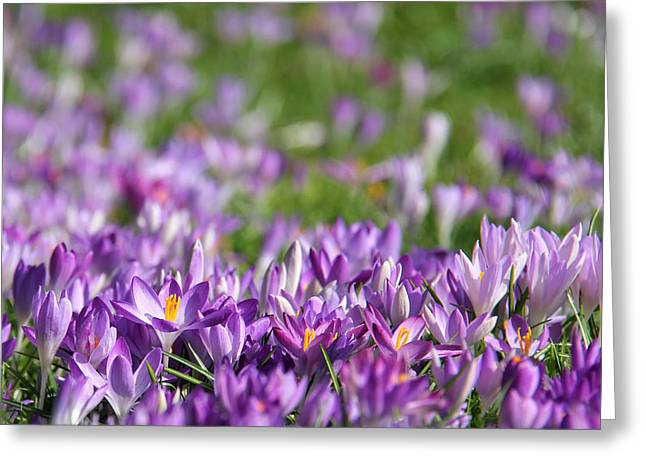 Purple Spring Greeting Card by Karin Ubeleis-Jones